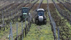 Пик на приема по новата лозаро-винарска програма