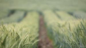 За да бъде по-ефективен, фермерът има нужда само от смартфон