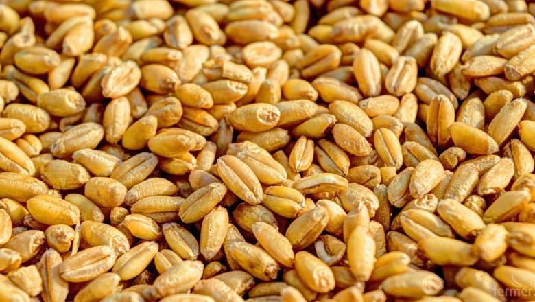 Стрес на пазара: Русия рязко намали износа на пшеница