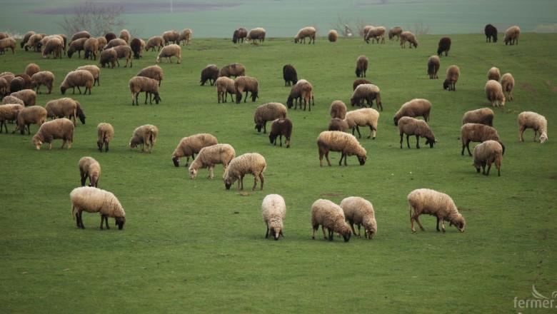 Офис в помощ на овцевъди и козевъди отваря врати в Търново