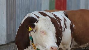 Месодайното животновъдство получи подкрепа от цените - Agri.bg