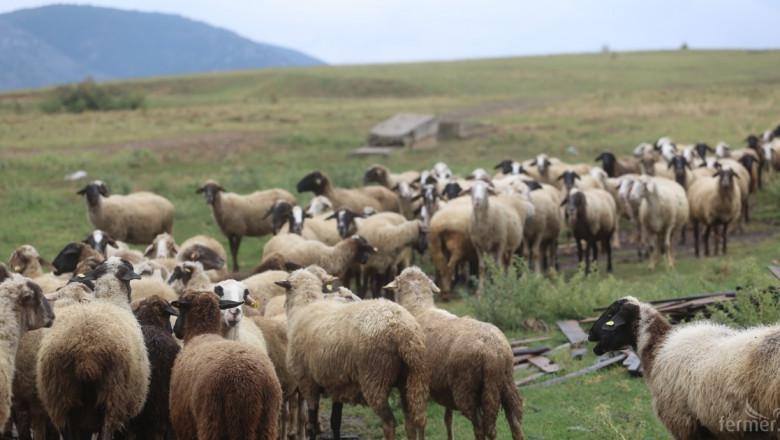 Порожанов: 2019 г. отново ще бъде трудна за животновъдите