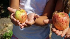 Търсенето на плодове в ЕС ще расте. Но на кои?
