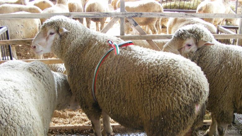 Чакаме ново решение от Брюксел за чумата по овцете