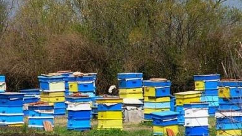 Грижи за пчелите през май – Болести и профилактика
