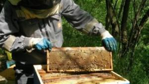 Грижи за пчелите през ноември