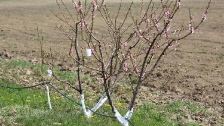 Презимуване на овощните растения и мерки за намаляването за третирането с пестициди през вегетационния период