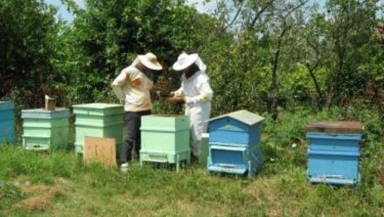Грижи за пчелните семейства през месец януари