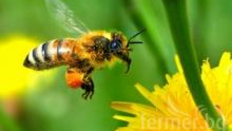 Екологично пчеларство