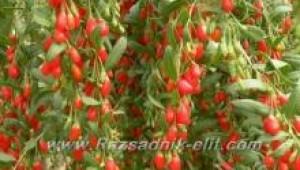 Болести и неприятели при Годжи Бери Goji Berry - Растителна Защита (Пръскане)