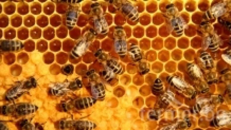 Пчелни килийки - видове