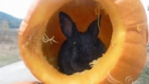 Да даваме ли на зайците тикви, пъпеши и дини?