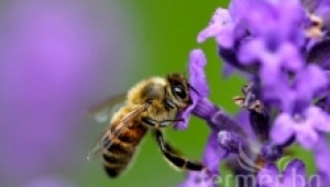 Пчелни индивиди