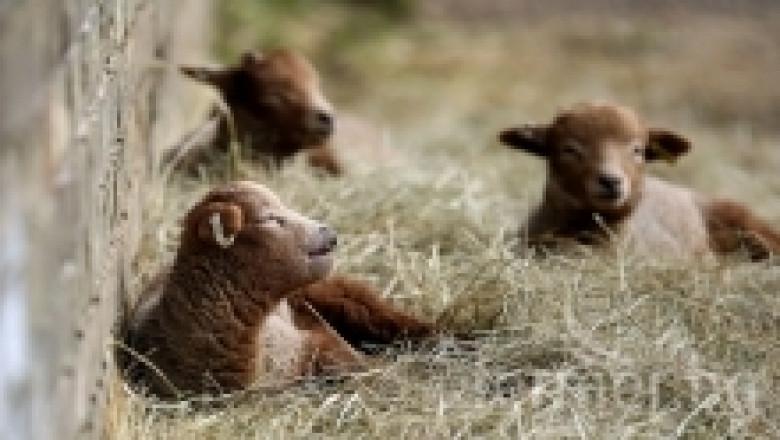Тетанус при домашните животни