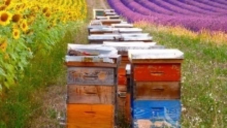 Устройство и организация на пчелина