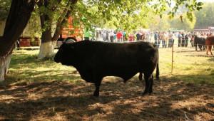 Изложение по животновъдство - Сливен 2012