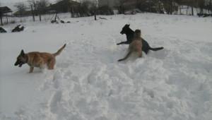 игра в първи сняг