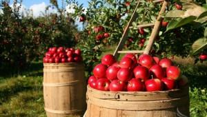 """AgriАнализ: Има ли визия за сектор """"Плодове и зеленчуци""""?"""