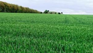 Фермери: Ще жънем. Посевите започнаха да се възстановяват