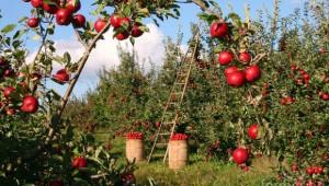 Размисли и страсти преди протеста на биопроизводителите