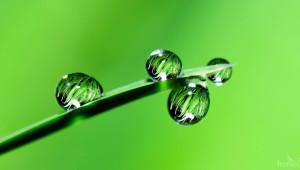 Дъждът съживи културите. Ще има ли още?
