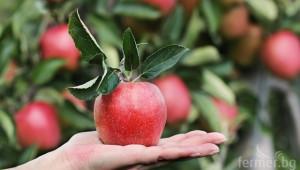 Кои фактори определят търсенето и предлагането на аграрна продукция?