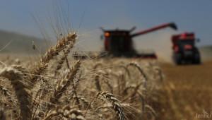 AgriTech Market: Технологичното земеделие
