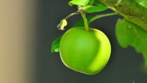 Полша: Произвеждаме много ябълки и какво от това
