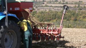 Сеитбата на пшеницата и ечемика навакса изоставането