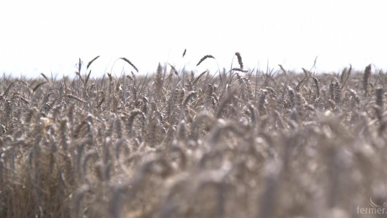 Нов сорт пшеница от Садово чака одобрение
