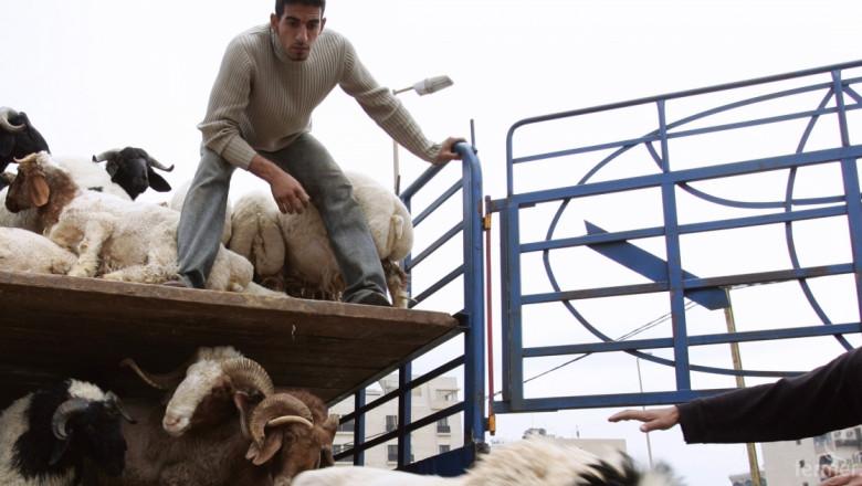 Да се спре търговията с живи животни