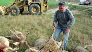 Нов проблем със стадото на Ани влезе в парламента