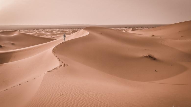 Учени ще превърнат Сахара в плодородна земя