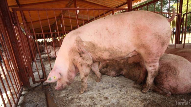Литва се отказва от свиневъдството?