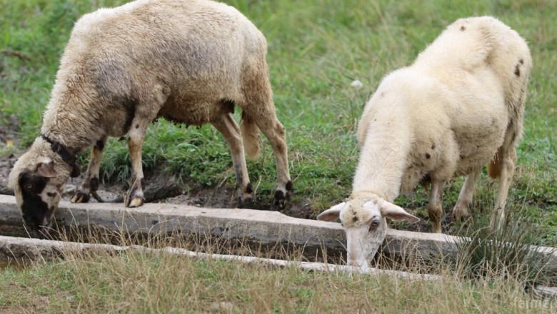 БАБХ проверява всички сигнали и съмнения за болести по животните