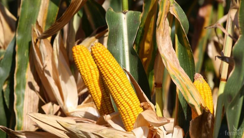 Спътник съобщава кога да се жъне царевицата
