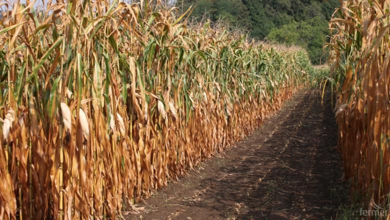 5 признака по царевицата, сочещи дефицит на хранителни вещества
