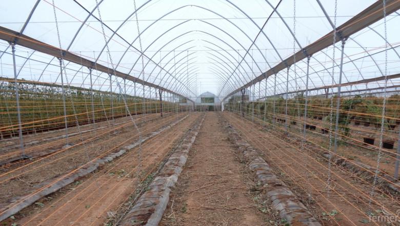 Испания загърбва стария метод на отглеждане на малини и боровинки