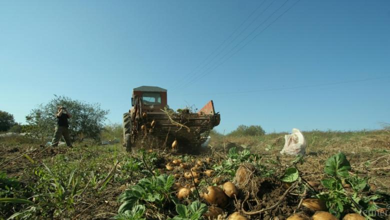 Горещините пазят картофите от фузариоза
