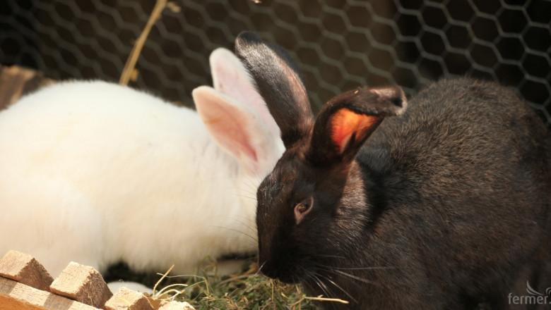 Опасност от злоупотреби с пасища за зайци