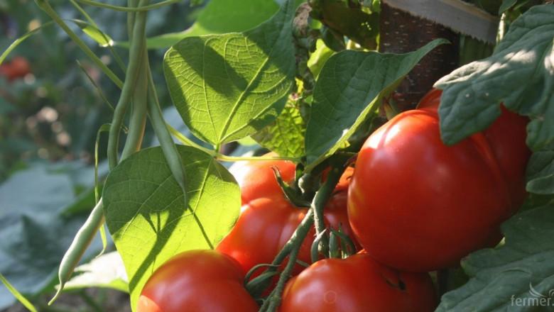Износ на български зеленчуци за Швейцария?