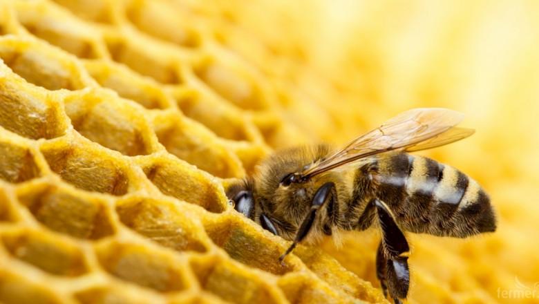 Признаха нова организация на производители за пчелни продукти
