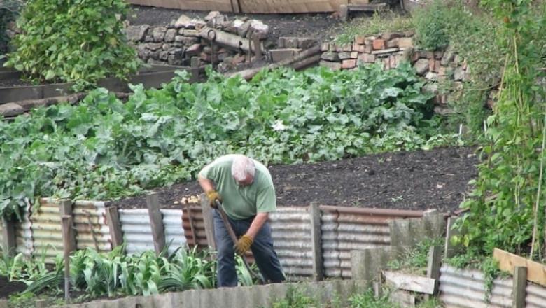 Агроиновации: Приложение на кръговата икономика в градинарството в Холандия