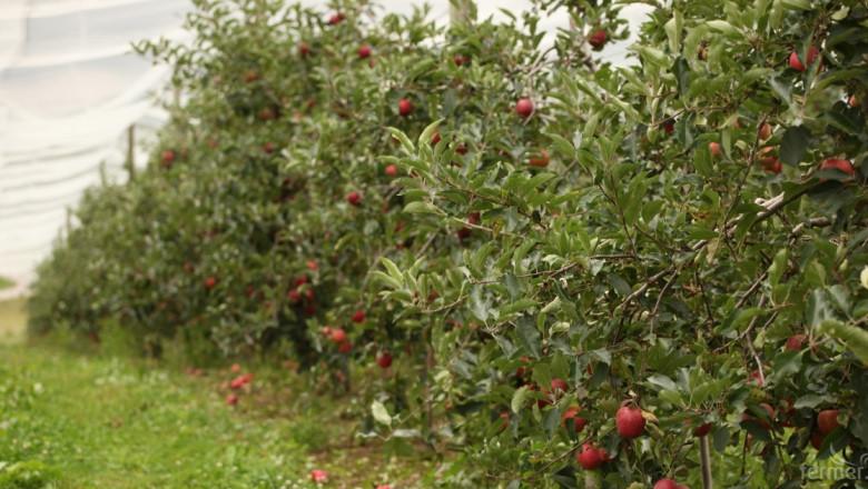 Призната е нова организация на производители на плодове и зеленчуци