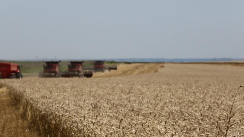 IGC: Световното производство на пшеница ще намалее значително