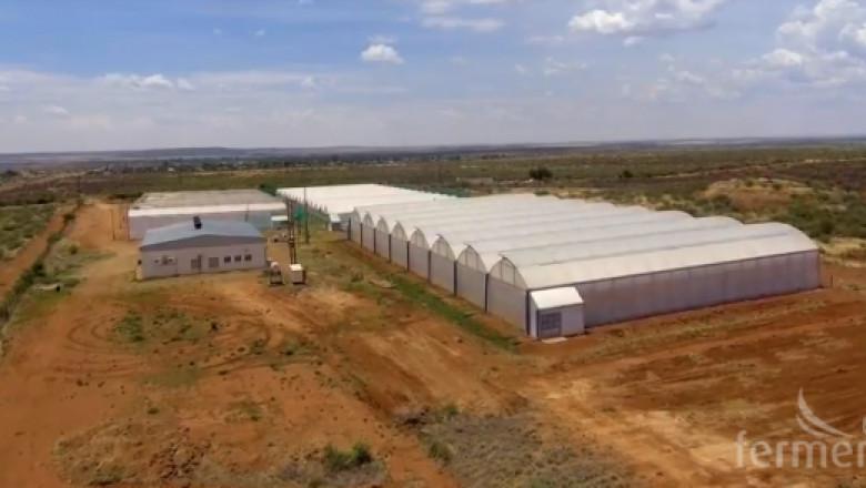 Как се произвеждат краставици в Южна Африка?