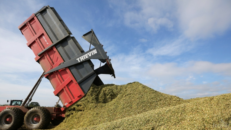 Прогноза: Глобалното производство на пшеница ще намалее с 2%