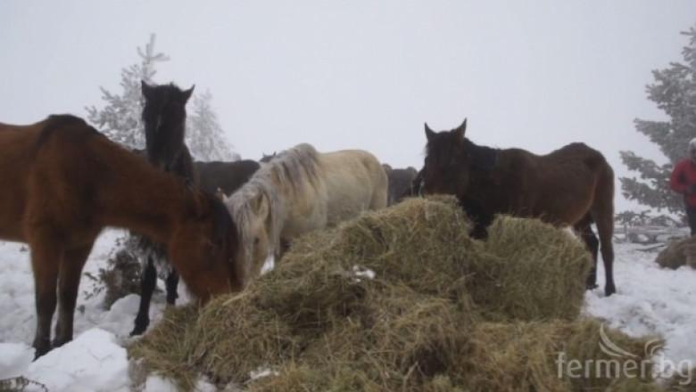 Комисия от БАБХ е установила собствениците на бедстващите коне