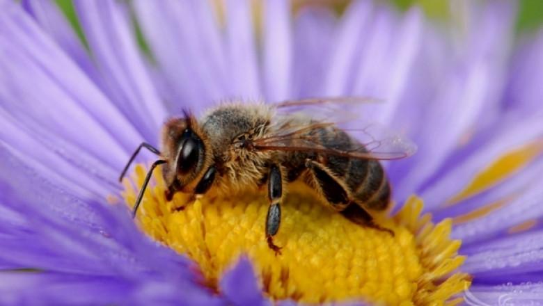 Започна изложението Пчеломания в Добрич
