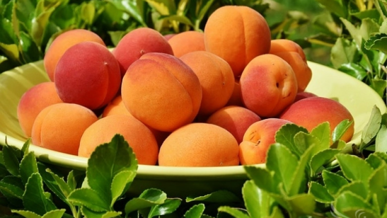 Овощарски съвети за стопаните в Силистренско